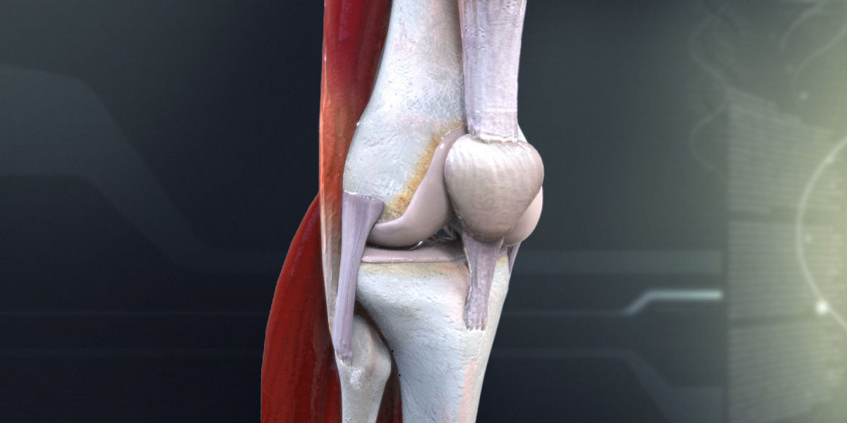 3d Model of Knee